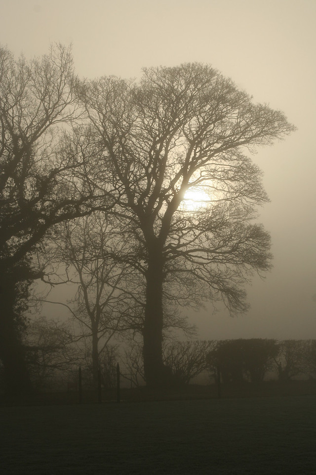 misty morning in Thetford Forest