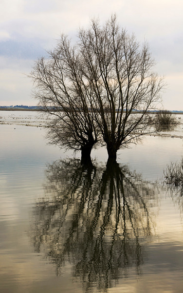 trees in flooded marshes